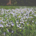 Duitse lente